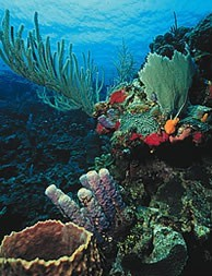 superb scuba diving, snorkling or relaxing tour is ideal all those looking for an exciting holiday or honeymoon and superb scuba diving or relaxing on two Palm-fringed Tropical islands, San Pedro, Ambergris Caye in the north and Tobacco Caye on the Southern Belize Barrier Reef