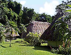 Pook's Hill Lodge, a beautiful, remote jungle lodge of comfortable thatched roof cabanas set in prime rainforest in Western Belize participating in ecotourism.and offering easy access to the Mayan cities in Belize and the tropical jungle in Belize.
