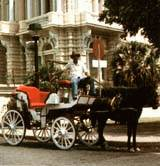 enjoy a horse-drawn carriage ride through the wide boulevards of Merida, Yucatan Peninsula